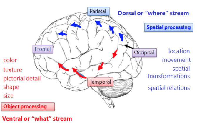 Visual Streams Diagram Online Schematic Diagram